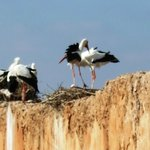 Storks on the palace walls.