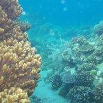 bigla laguna corals