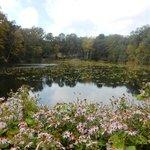 Arboretum Lake:  Fall Asters