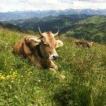Ausflug in die nahe Bergregion; mit Seilbahnen möglich