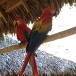 Macaws in the research center