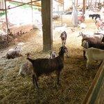 Один из уголков фермы при гостинице