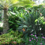 Beautiful tropical plants and trees