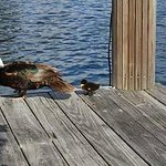 Momma duck stops by to show her duckling all the amenities the Cabanas has to offer