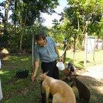 Tour guide Kamin feeding the Kangaroos
