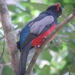 Beautiful Bird in the park