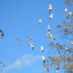 flock of waterbirds