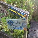 Blue butterfly - foto 1