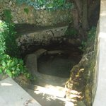 The view of the spring. It has little fishes in it