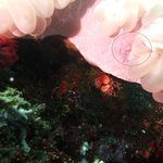 The tiny, almost transparent shrimps...