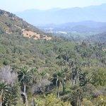 La Campana - Chilean Palms