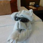 towel dog