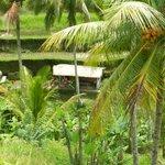 Tegallalang Rice Terrace