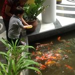 my son enjoy feeding the fish, the staffs are kind, so they let my son feed the fish