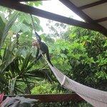Monkeys on Mot Mot deck