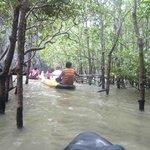 por los manglares de la bahia