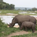 Beautiful White Rhino with her calf