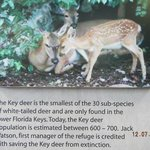 deer key information
