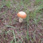 Wild mushroom risotto anyone?