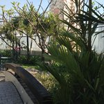Japanese Garden on the Roof of the Hotel