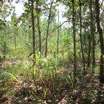 Jaguarundi trail