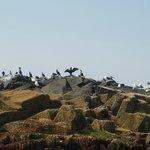 Sea Birds on the Rocks