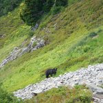 More bear along the trail