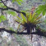 A paisagem é bela, interessante ver a simbiose entre as plantas diversas