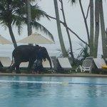 Baby elephant valentine visits twice everyday