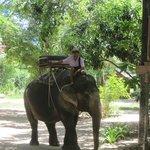 Foto di Elephant Village Pattaya