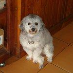 cute pet dog at DELTA Lao Coffee