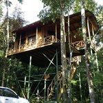 Yiguirro Tree House