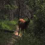 Elk on the trail right in front of us!