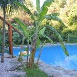 bananeros en los alrededores... el toque tropical!!