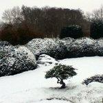 Japanese Garden at Japan House