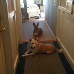 Spacious Hallway in Room