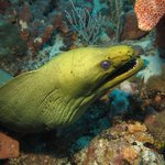 Green Moray - not the bar