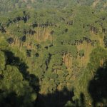 Mountain forests around the valley