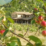 View of Località il Piano farmhouse through the apple orchard