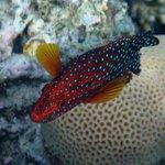 genial die Unterwasser Welt