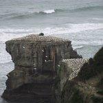 Gannet colony above the black sand beach.