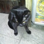 Wifi, the friendly hostel cat