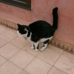 Un des nombreux chats un matin sur la terrasse