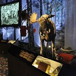 The new permanent exhibtion. Photo: Ilja Koivisto/The Hunting Museum of Finland