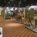 The permanent exhibition of the Hunting Museum of Finland