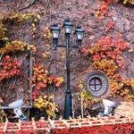 レンガ館のつた紅葉