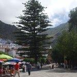 Cedar in Main Square