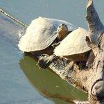 Tortoise in Kaziranga