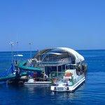 Pontoon at Knuckle Reef