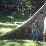 Trees grow big in Belize! Just the base...